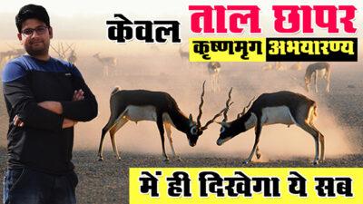 ताल छापर कृष्णमृग-अभयारण्य की रोचक यात्रा Churu Rajasthan