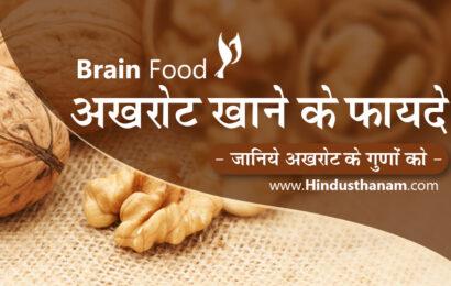 अखरोट खाने के लाभ व विभिन्न रोगों में उपयोग Walnuts Benefits and Side Effects in Hindi