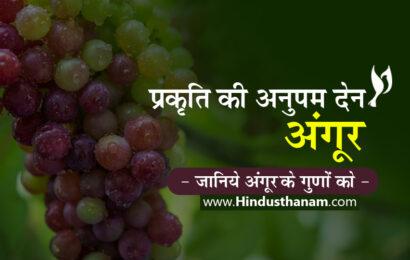 प्रकृति की अनुपम देन 'अंगूर, Properties and Health Benefits of Grapes in Hindi