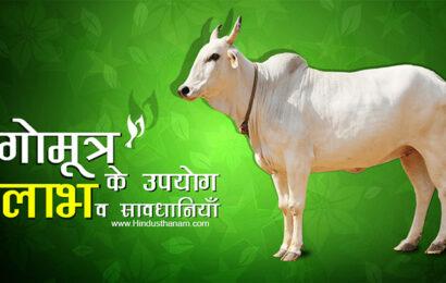 गोमूत्र के विभिन्न रोगों में उपयोग, लाभ व सावधानियाँ Cow Urine (Gomutra) Benefits and Side Effects in Hindi